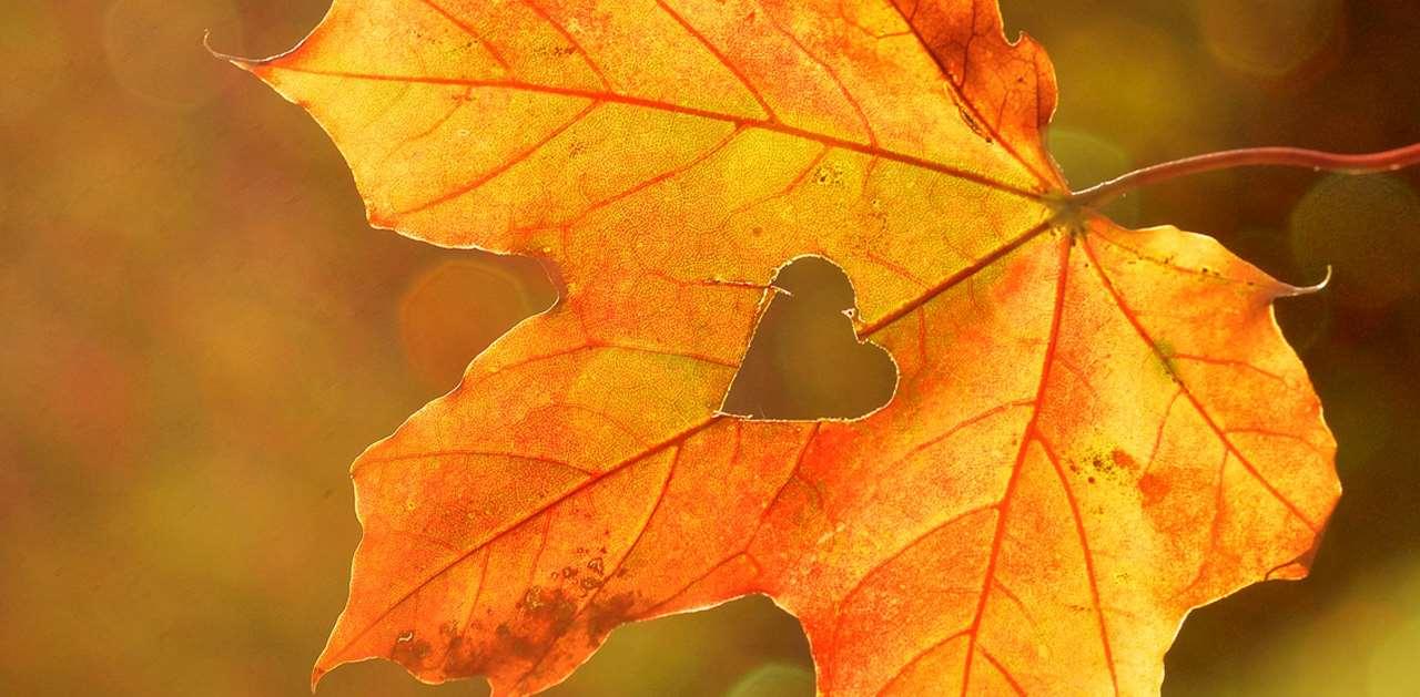 Gult löv med ett hjärta utskuret i mitten